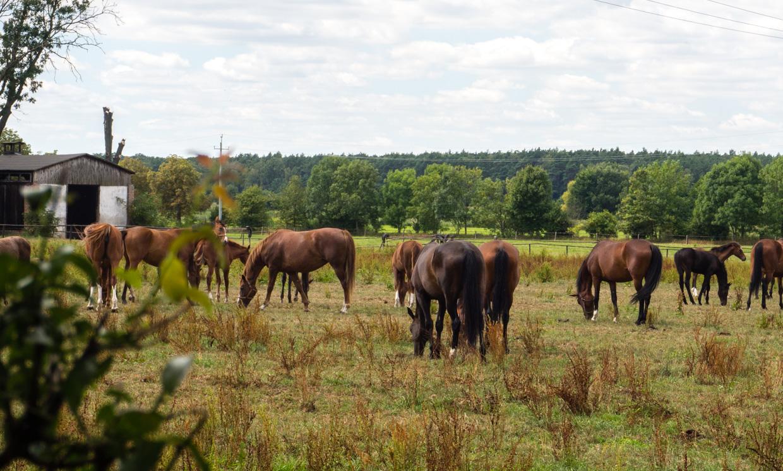 stadnina koni w Racocie