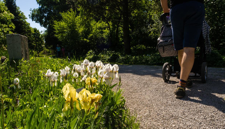 ogród botaniczny w Bayreuth