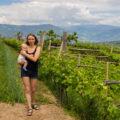 Caldaro winnice