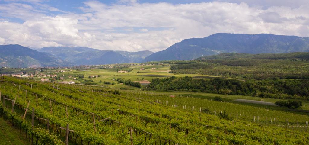 Caldaro winnice południowy Tyrol