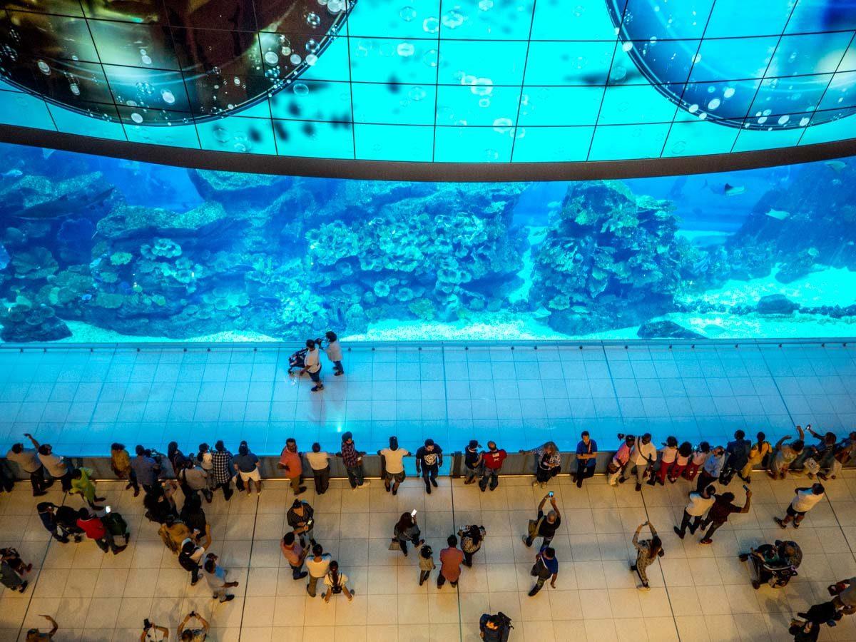 Dubai Mall akwarium