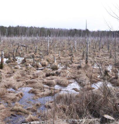 Bagno Jacka – dzikie Mazowsze